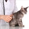 Ветеринарные клиники в Березниках